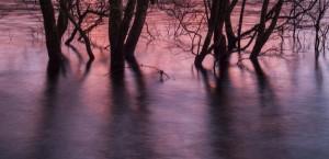 Lomond Mangrove Sunset